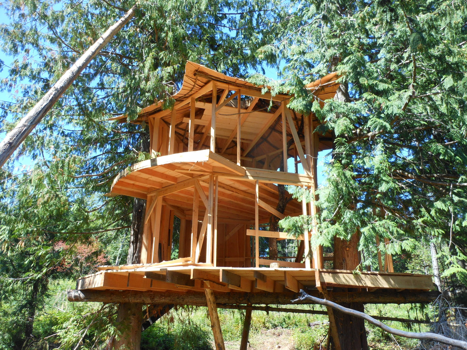 SunRay Kelleys New Treehouse The Shelter Blog
