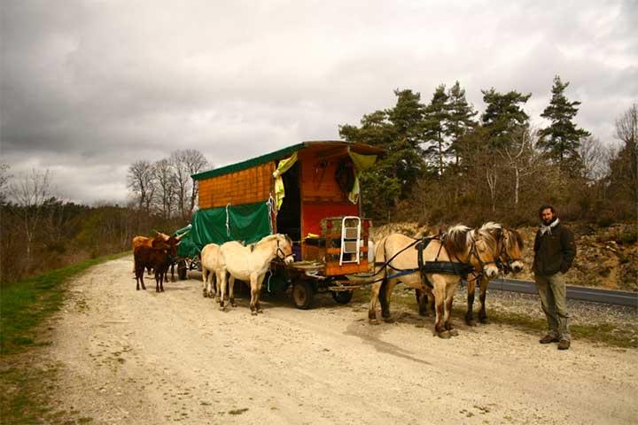Elegant Picture SX20233 Horse Drawn Caravan  20110827 Camping Breda With Hans
