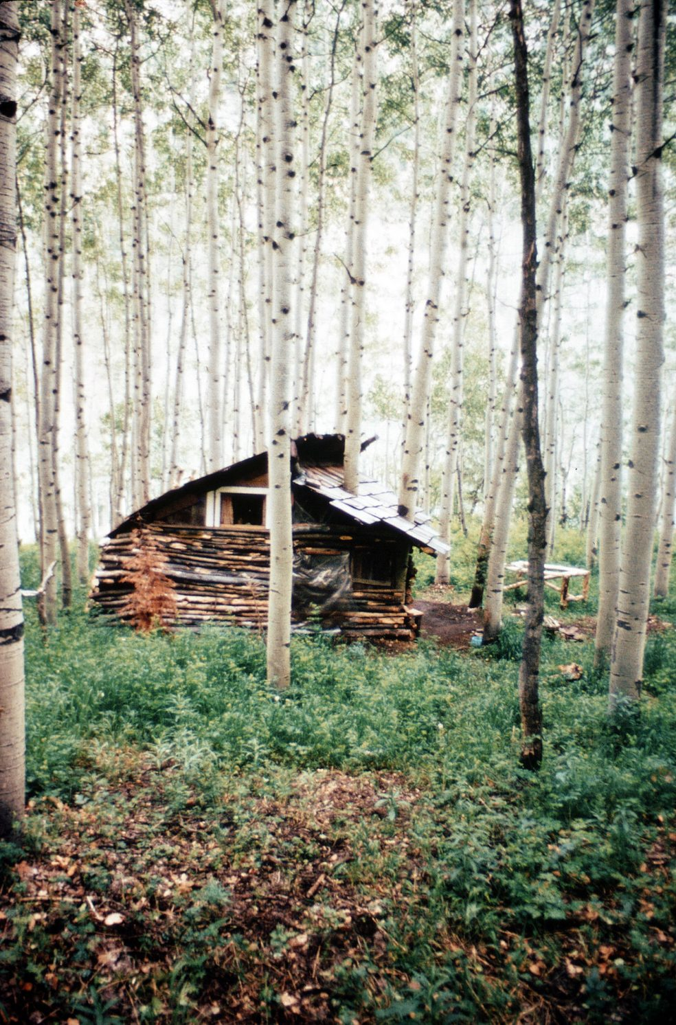 Log Cabin In Colorado Woods The Shelter Blog