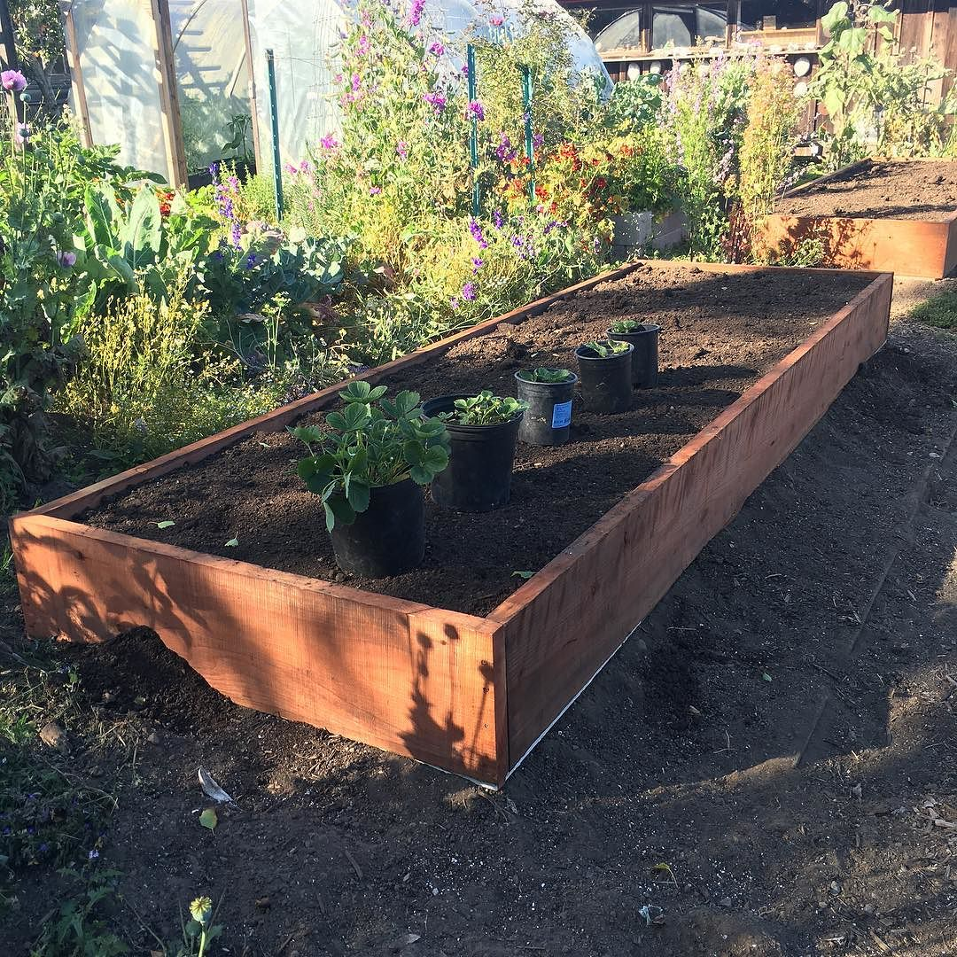 Raised beds in garden 4 12 12 deep the shelter blog How deep should a raised garden bed be